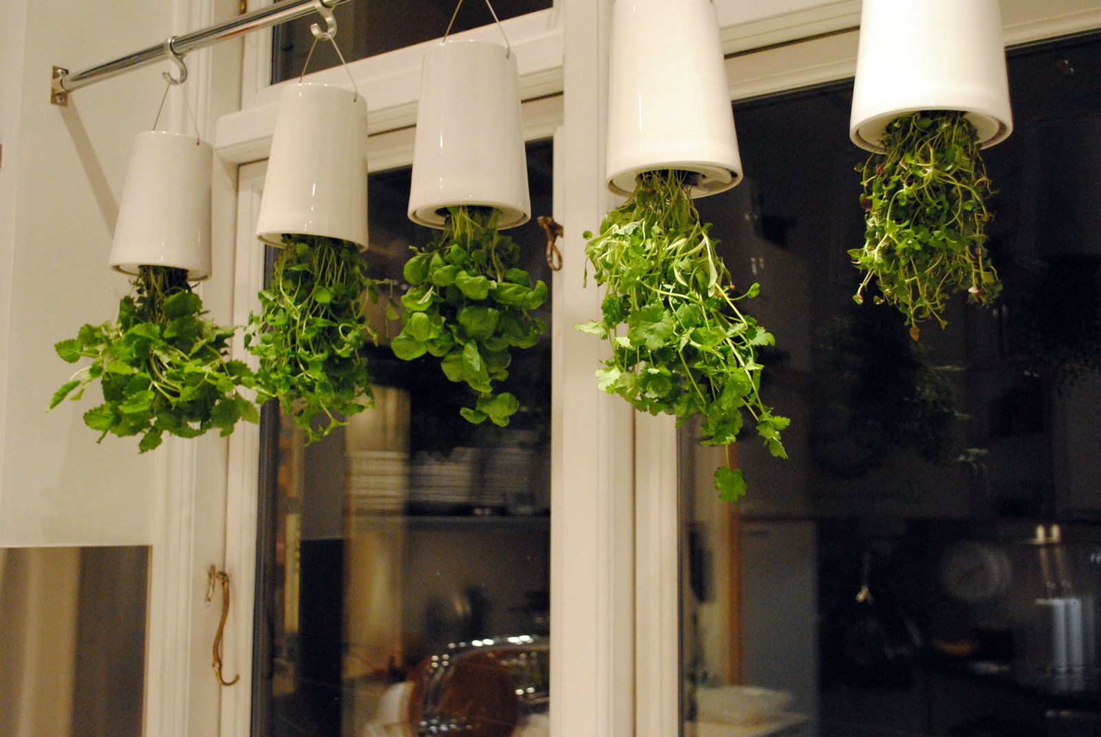 Sandras kitchen: Herb garden