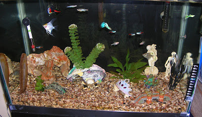 Ryby akwariowe a woda w ich życiu cz2