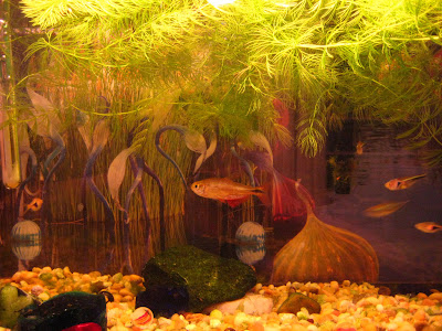 Akwarium skład hemiczny wody