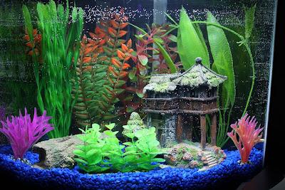 Ryby akwariowe akwarium po gryzoniu