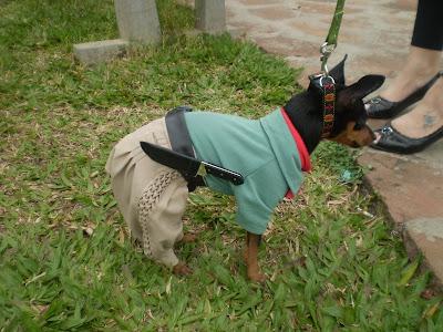 cachorro de gaúcho