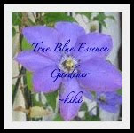 True Blue Essence