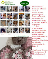 Amor a los animales maltratados...