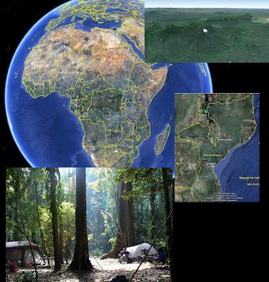 Bosque inexplorado en Mozambique