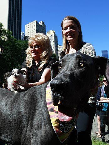 El perro mas grande y mas chico del mundo