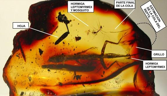 Insectos atrapados en ambar de hace 50 millones de años