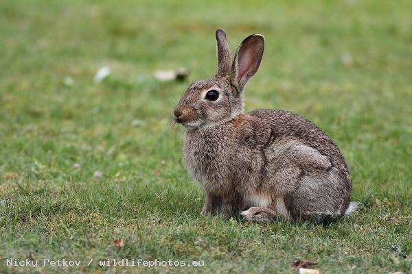 Фото заек
