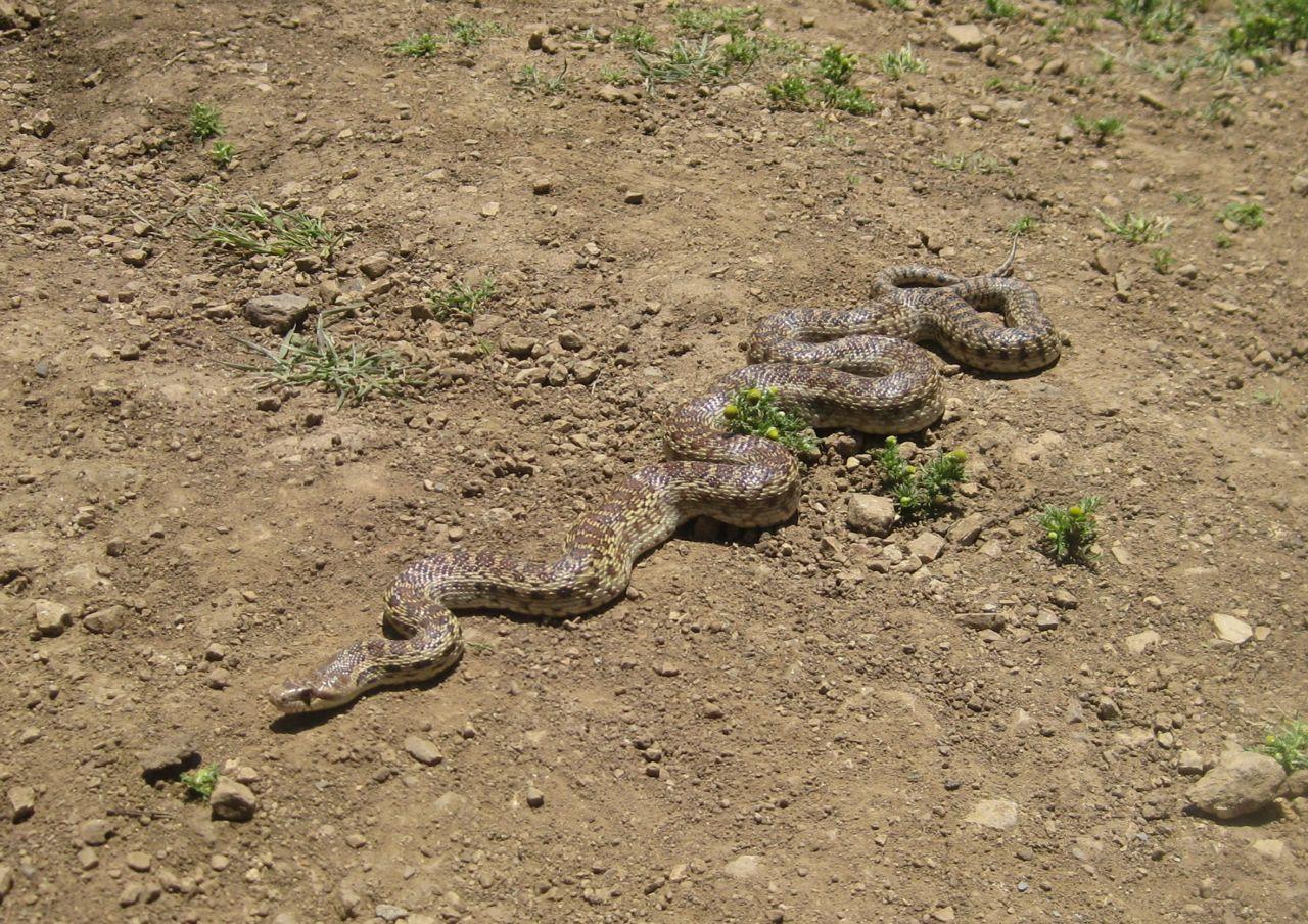 Half Fish Half Snake - photo#15