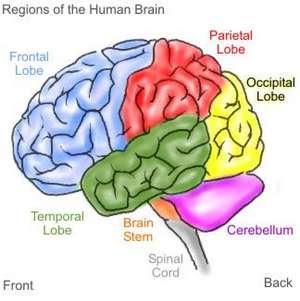 Tips 6 Cara Agar Otak Berkembang Pesat