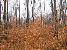 Fall in the Sacred Grove