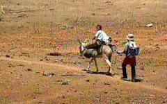 PAN - Combate à Desertificação