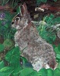 Bunny in the Violets