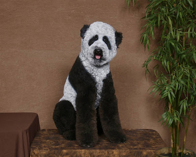 Just in case panda really got extinct, at least we have poodles!