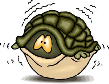 La position de la tortue Turtle+in+shell