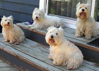 Dog Grooming Scotland