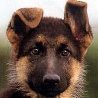 Baubau magazine nomi da cane for Nomi per cani maschi taglia piccola