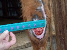wound size 3/36/2009