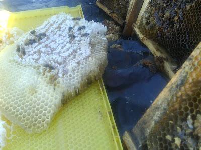 старые рамки с мёдом