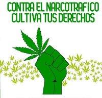 Y hoy preso está por cultivar marihuana (Cancion)