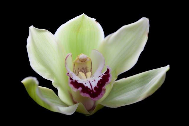 [20100315_Studio_flowers-24.jpg]