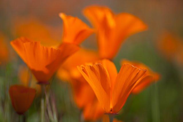 [20100316_ShellCreek_Flowers-233.jpg]