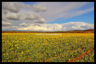 sker and kenfig photography