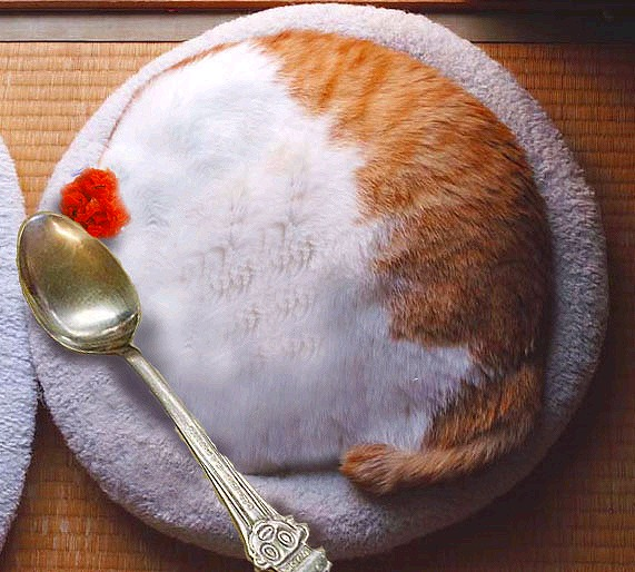カレーライスのような猫