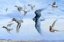 Tiercel peregrine and teal
