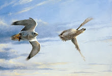 White Gyr and Sharptail