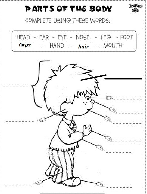 body parts worksheet what to wear to skol worksheet