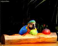 Indonesian Birds Presentation, Safari Garden