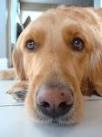 PARKER • doggy