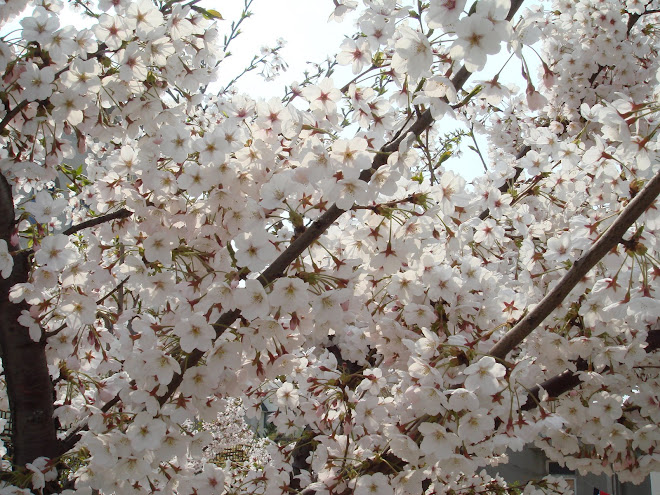 Lucky Sakura