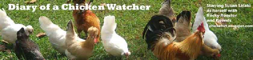 Diary of a Chicken Watcher