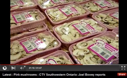 Mushrooms Go Pink CTV News