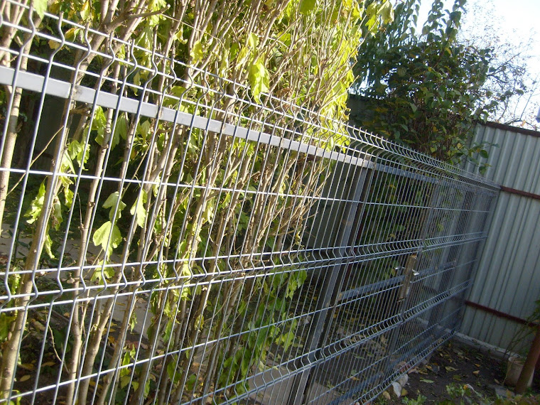 Gardul din fata casei 27 octombrie 2008