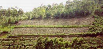 Icse Resource Provider: Soils in India