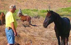Brian & the wild horses..Baja