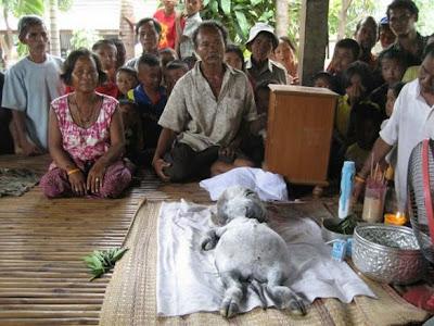 Warga Thailand Mendadak Gempar Dan Heboh Setelah Mereka Menemukan Makhluk Langka Dan Aneh Menurut Kabar Yang Beredar Makhluk Aneh Ini Di Temukan Di Sebuah