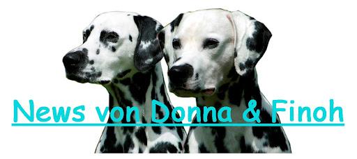 News von Donna & Finoh