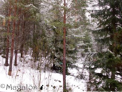 Snö i skogen. (Snöligorna syns mest som vita streck)