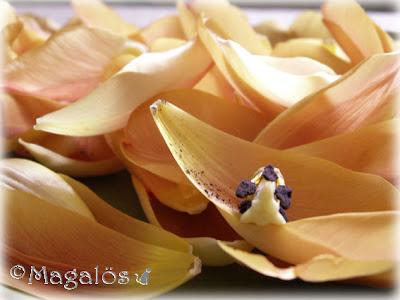 Flera lösa tulpanblad på ett fat.