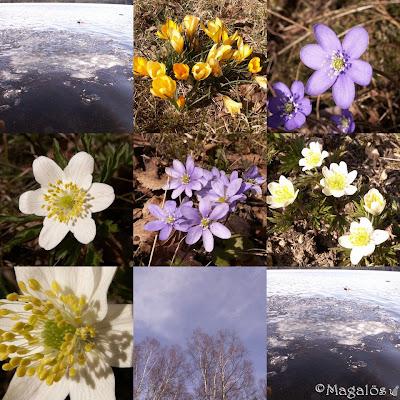Vårcollage av blommor, himmel och vatten.