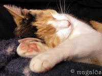 Söta kattfröken ovanpå soffan.