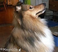 Väninnans hund