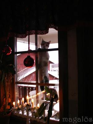Kattfröken hänger i köksfönstrets spröjs.