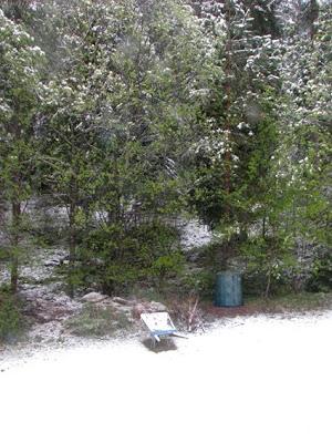 Snö på vårens gröna blad.