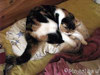Kattfröken mitt på min kudde, liten bild.