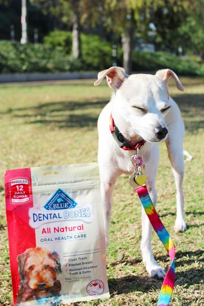 Natural Pet Health Roseville