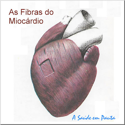 As Fibras do Miocárdio